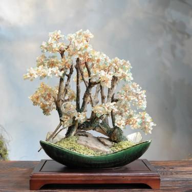 Cây Ngọc Thịnh Phú _B1204